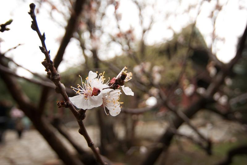 Summer Palace  Beijing, China — April 2010