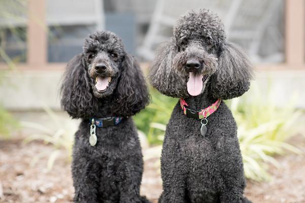Pippa & Stella