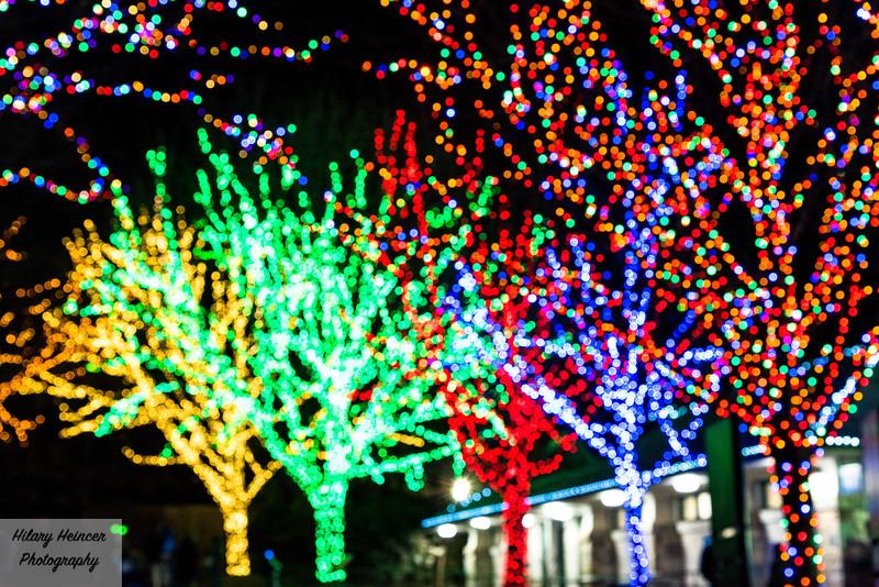 Christmas Lights-204.jpg