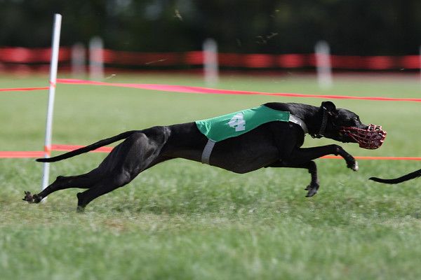 2009 Whippet NOTRA National part B