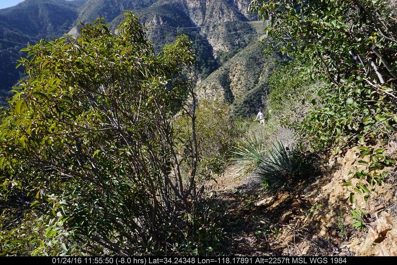 20160124009-Ken Burton Trailwork.JPG