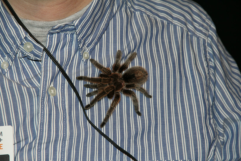 tarantula on an employees shirt - Aaron touched it, but neither boy would hold it