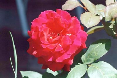 Pack 6 - Flowers