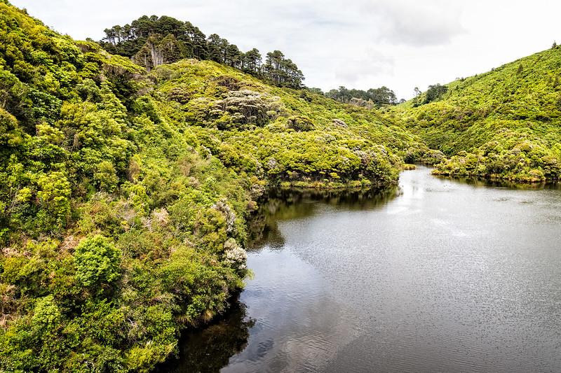 View of vegetation and water inside Zealandia in Wellington, NZ.