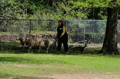 Sunday P/T Sheep