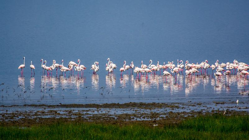 Kenya-0232.jpg