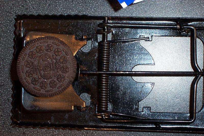 Odis Trap Close-up.jpg