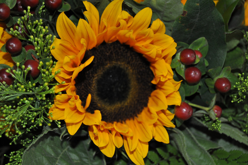 2010 Flowers 74.jpg