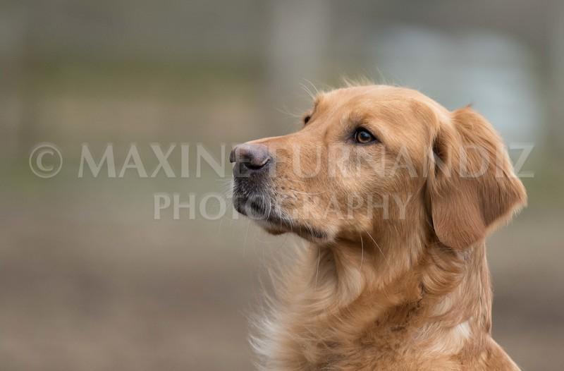 Dogs-5833.jpg