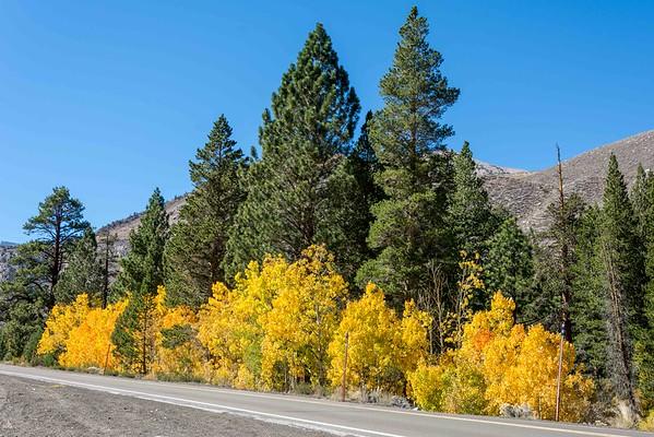 Eastern Sierra Fall 2015