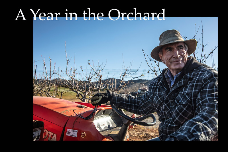 Album-non-event_A Year in the Orchard_cynthia_hedgecock.jpg