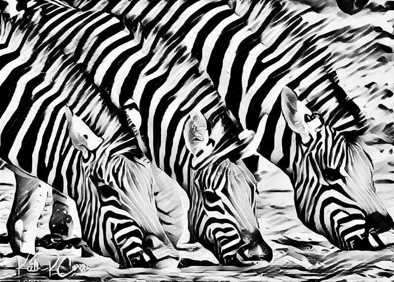Drinking zebras styled B&W deepdream.jpg