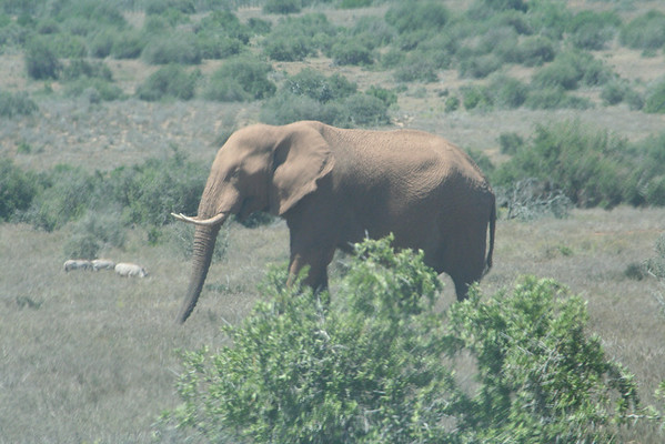 South Africa Part 7