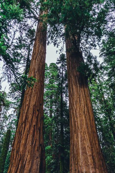Rui in Sequoia-07013.jpg
