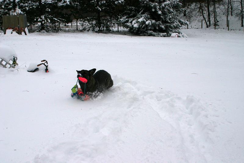2009.12.9 Blizzard Brita yard (19).JPG