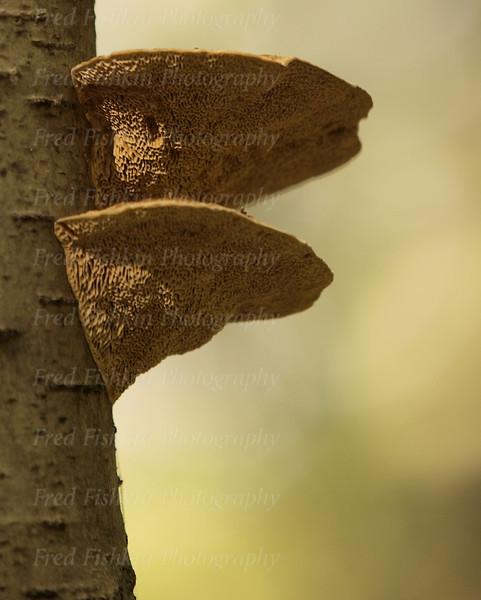 funghi couple.jpg