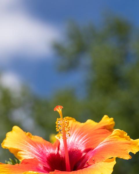 FineArt_Flowers_051520_0222.jpg