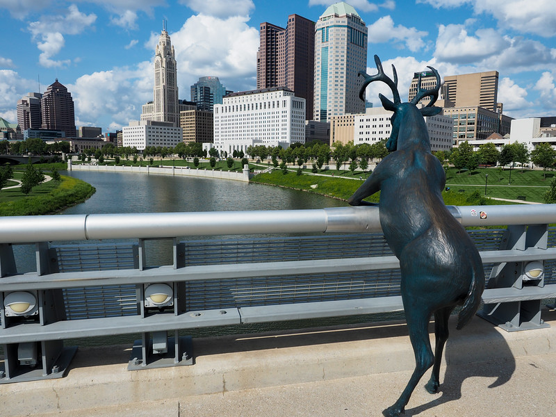 Deer on Rich St. Bridge in Columbus