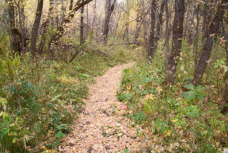 walk-in-the-woods1.jpg