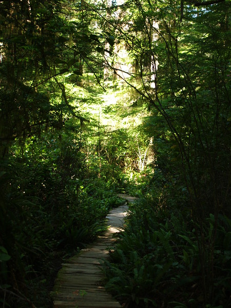 The boardwalk just disappears into the lushness. (2009)