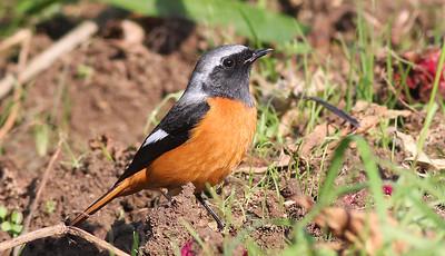 Local Kishiwada Birds 2015