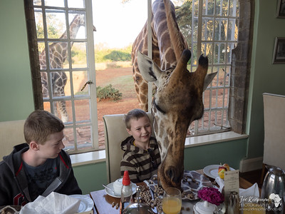 Breakfast with Giraffe