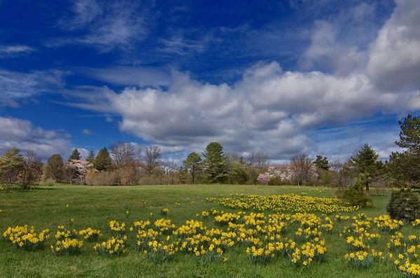 Willowwood Arboritum, Far Hills, NJ March 2012
