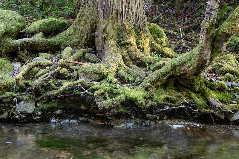 TreeRootsRiver.jpg