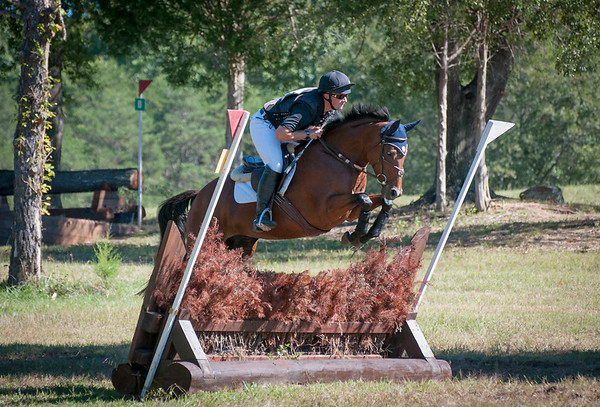 SOLD! Fairfax - 2009 TB mare
