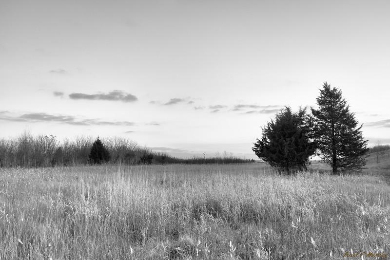 Frigid Field