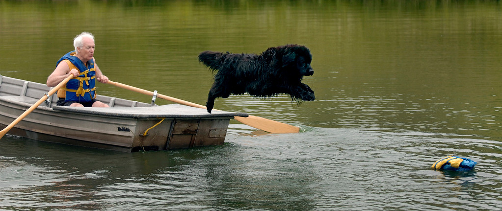 . Bruce Karger\'s Newfoundland water rescue dog Dory jumps from a boat to retrieve a life jacket in the water during a demonstration at the Lake Metroparks\' Working Dog Weekend in 2011. This year\'s event is June 9-10 at the Farmpark. For more information, visit www.lakemetroparks.com/events-activities/events/working-dog-weekend. (News-Herald file)