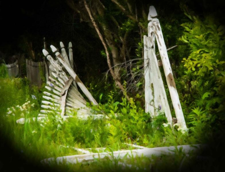 The Fence-1.JPG