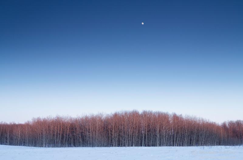 Moonrise over Wolverine community pasture. Plunkett, Saskatchewan