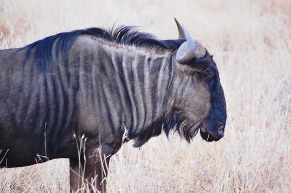 Kruger - Day 8 - Oct 20