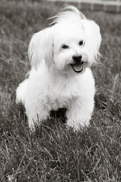 opal mike dogs (1 of 1)-91.jpg