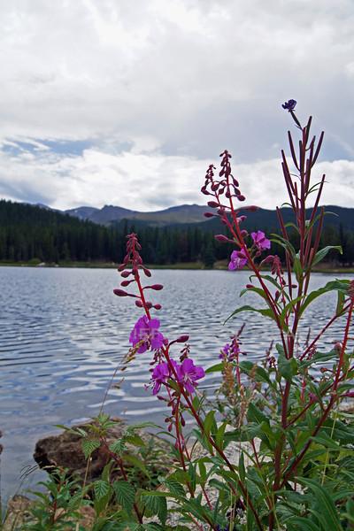 Flowers at Echo Lake.jpg