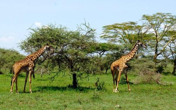 1494239970African-Safari-20.jpg