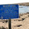 Warning Sign - Piedras Blancas Elephant Seal Rookery