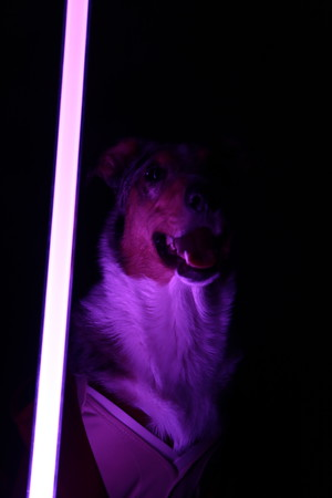 Rune the Jedi 4-4-2021