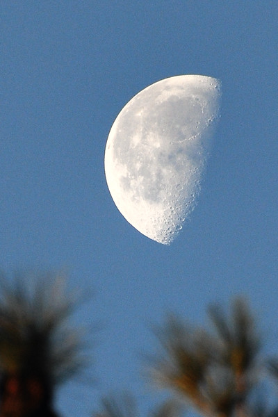 """The woodpeckers and squirrels were out and about this morning, but none would hold still long enough to have their picture taken. I was finally forced to settle on the moon. This is the first time I've taken a picture of the moon during the day and was surprised by the detail that could be seen. It had me singing all day, """"I love the moon, and all it's phases ..."""""""
