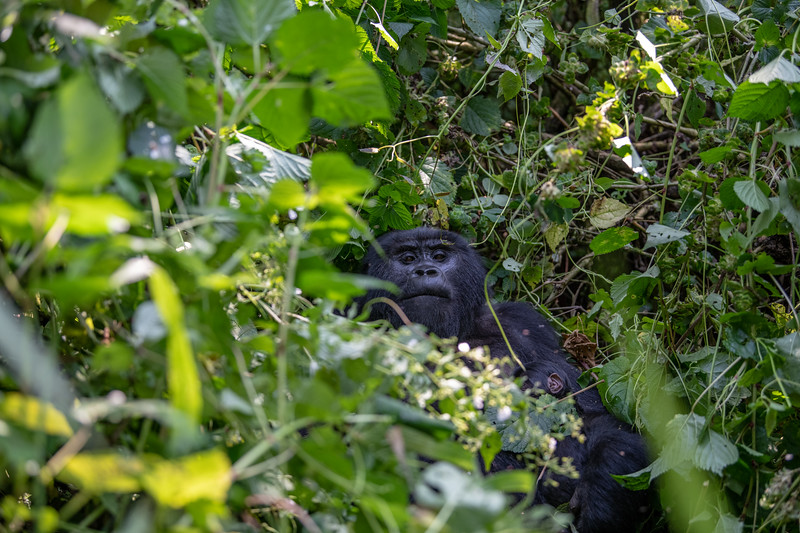 Uganda_T_Gor-959.jpg