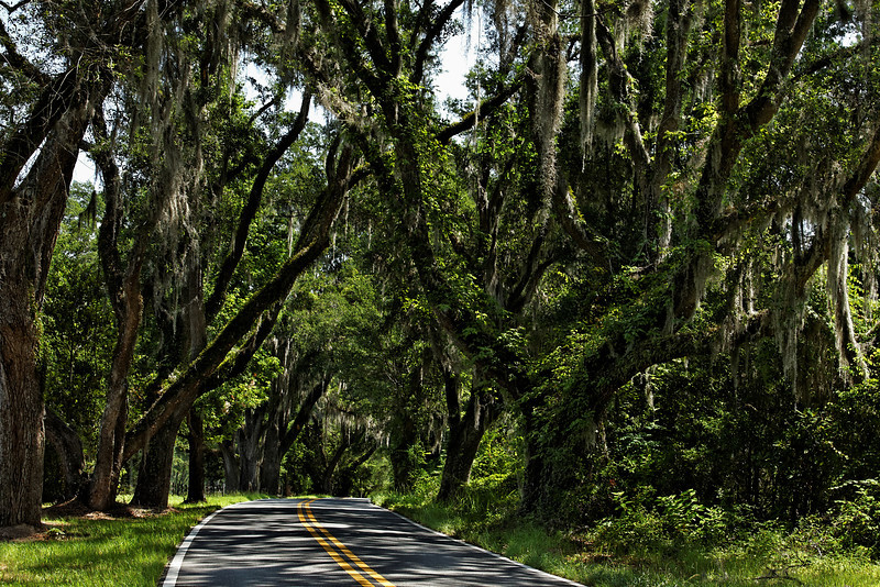 Canopy Road (Long and Winding Road - Tallahassee, Florida