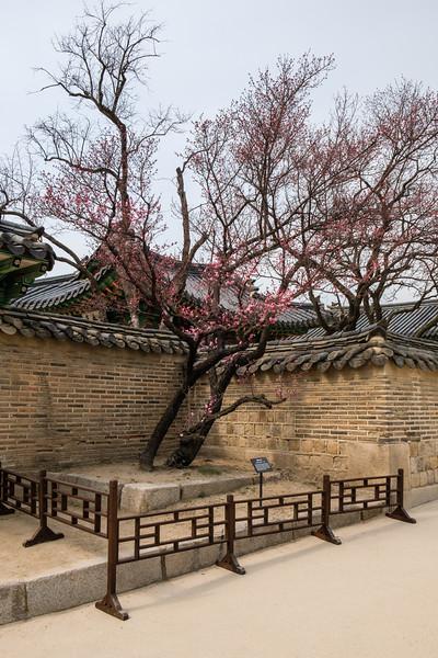 20170325 Changdeokgung Palace 035.jpg