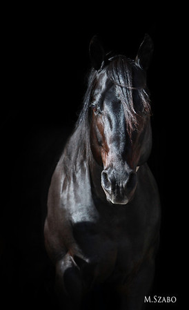 Private Dreamer Stallion