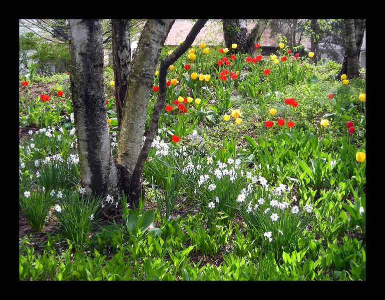 52. Springtime Flowers on the Hill.jpg