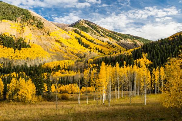 Aspen Fall Meadow