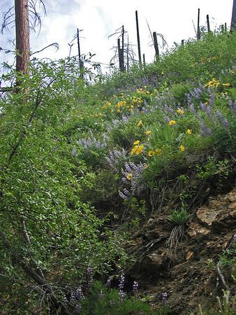 Tumwater Canyon 2004