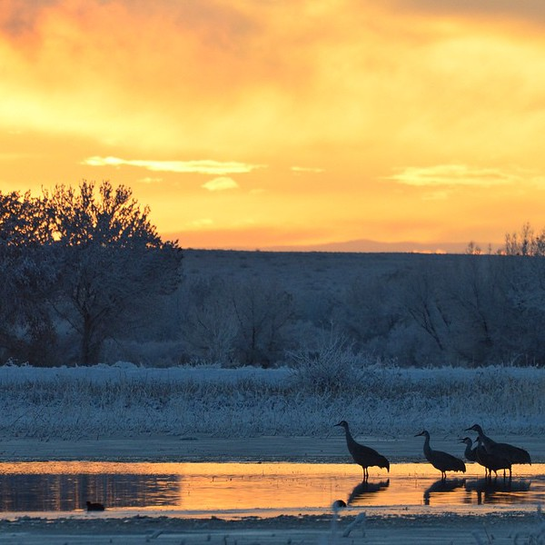 Sandhill cranes at sunrise. via Instagram http://bit.ly/1rQdWNW