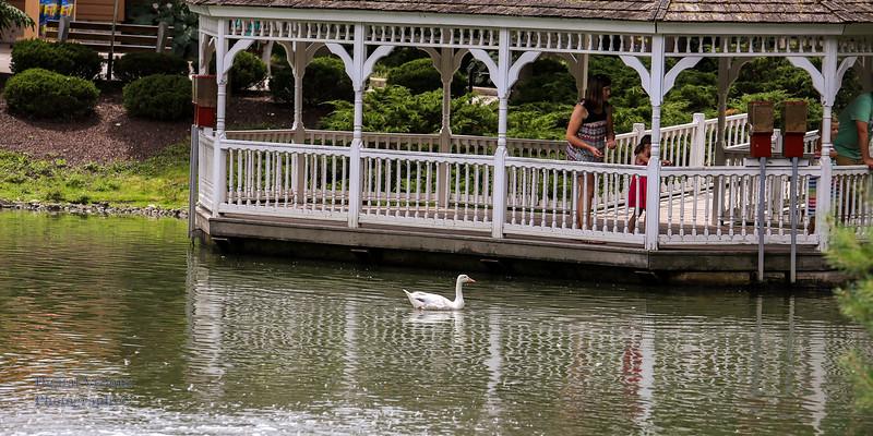 2016-07-17 Fort Wayne Zoo 968LR.jpg
