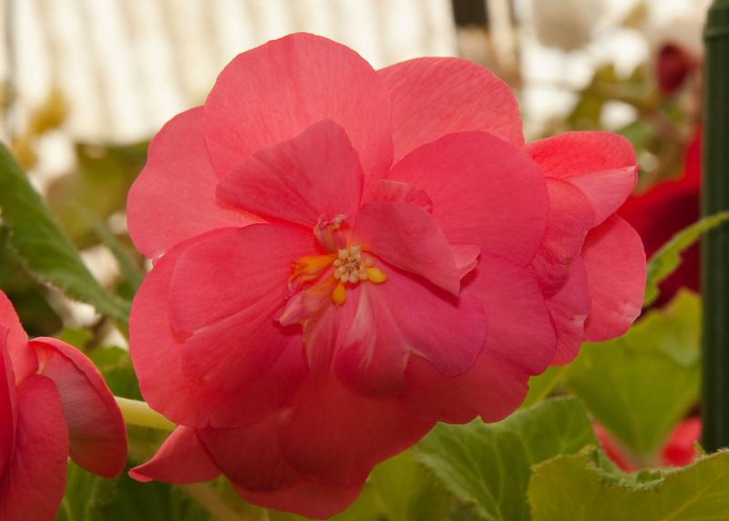 2009 09 06_White Flower Farm_0141_edited-1.jpg